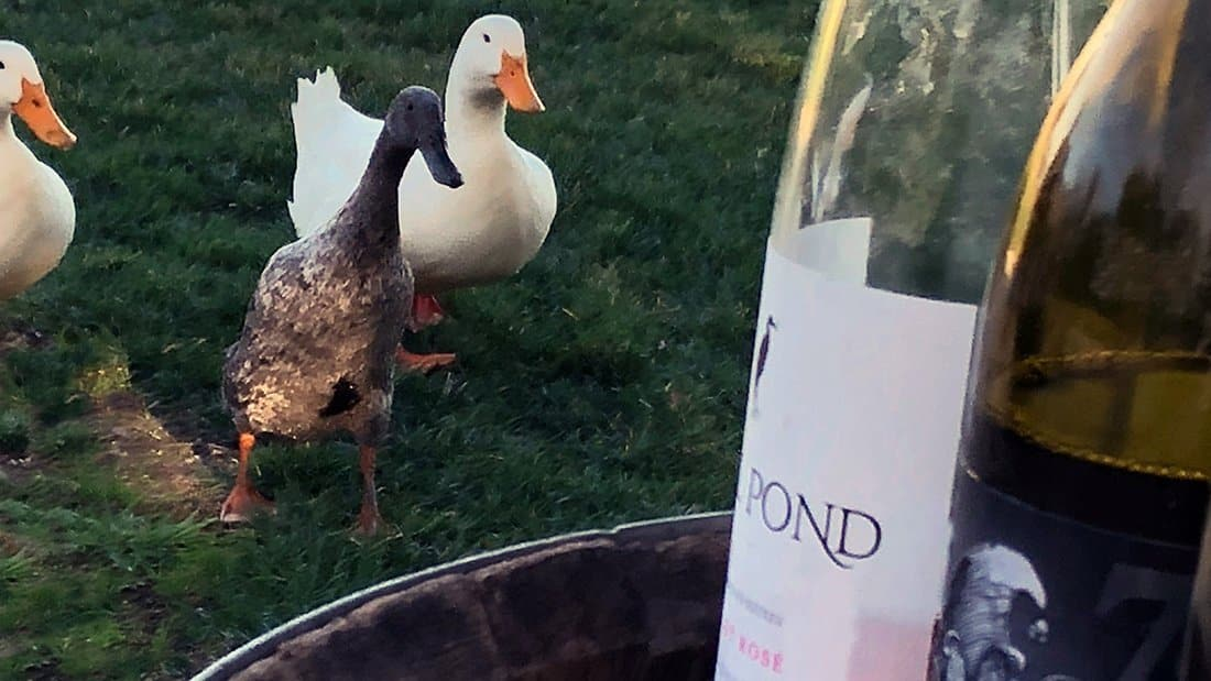 Three ducks looking at wine bottles as if they want to taste some wine too!