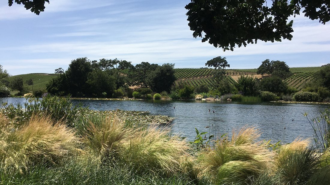 A beautiful pond surrounded by oak trees and vineyards.