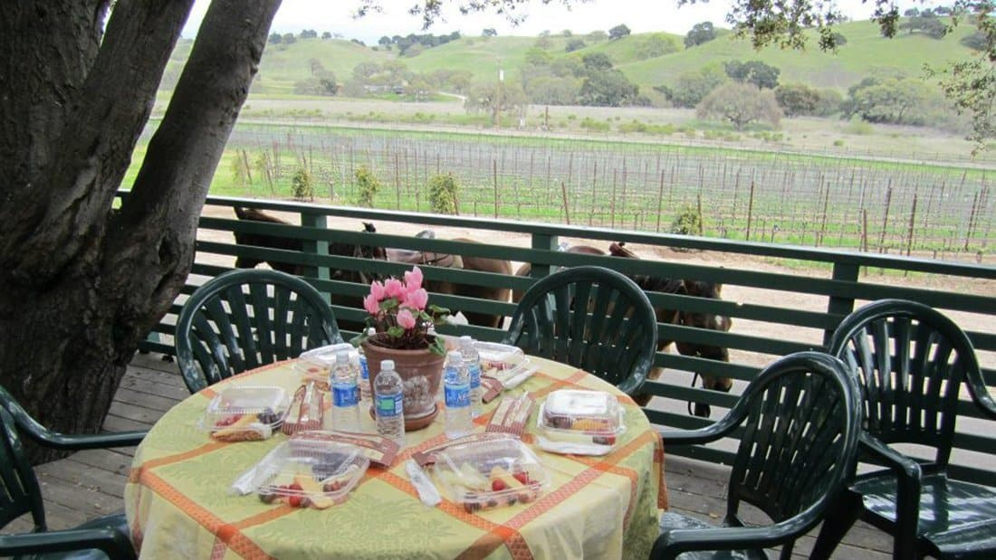 Lunch set at a round table on the deck overlooking the vineyards and horses too!