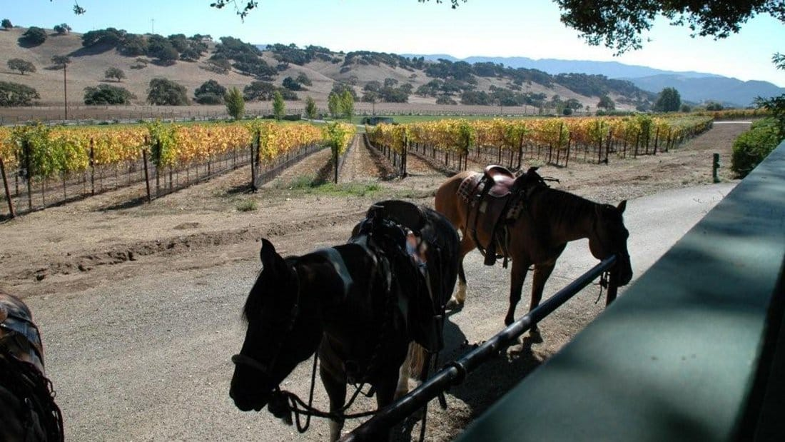 Horses tied up outside a winery tasting room.