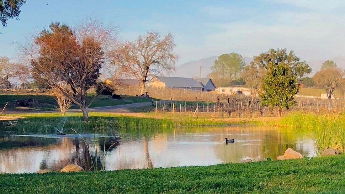 A venue for tasting at a duck pond with beautiful reflections on the water.