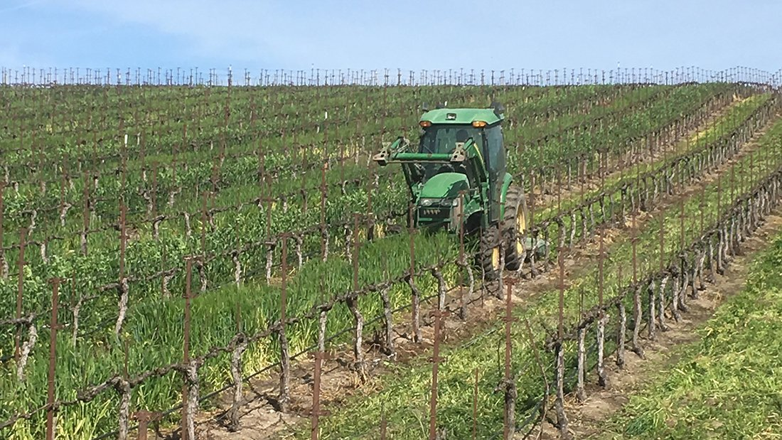 A tractor mowing the cover crops in between the rows of a Santa Barbara Vineyard.