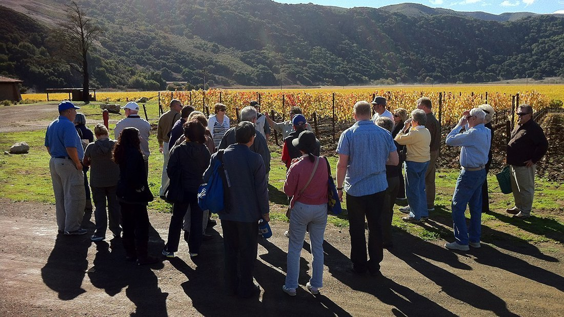 A group gathered in the vineyard learning about wine grape growing and harvest.