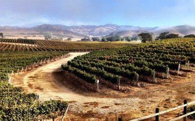 The Magic of Midweek in Santa Barbara Wine Country