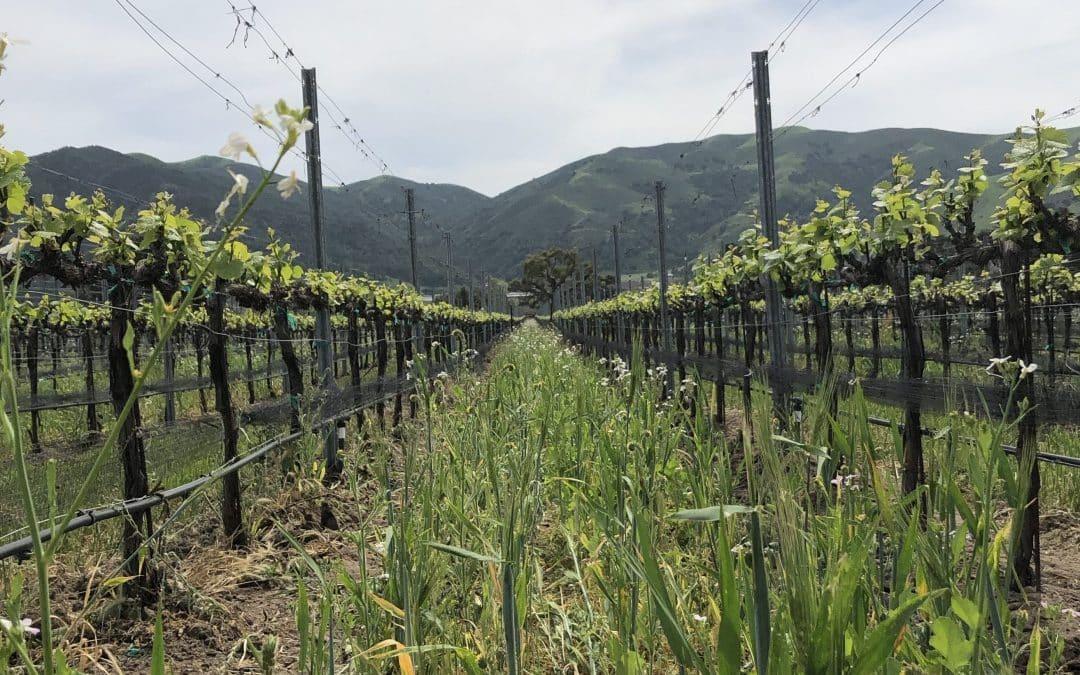 Santa Barbara Wine Tours, Springtime Wine Tasting